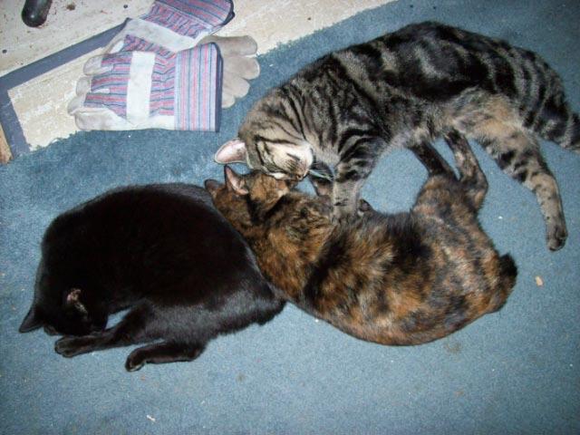 Cats 100_7626