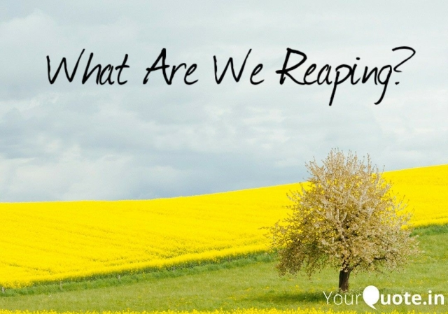 2019 08 27 What Are We Reaping (2)