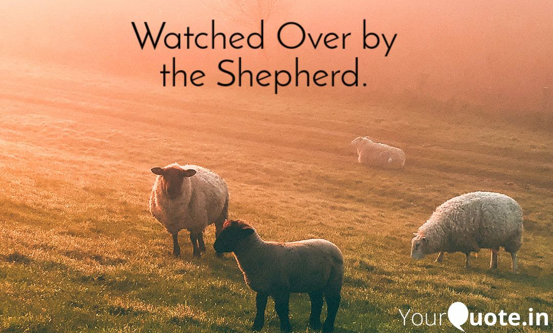 2019 08 30 Watched Over by the Shepherd WP
